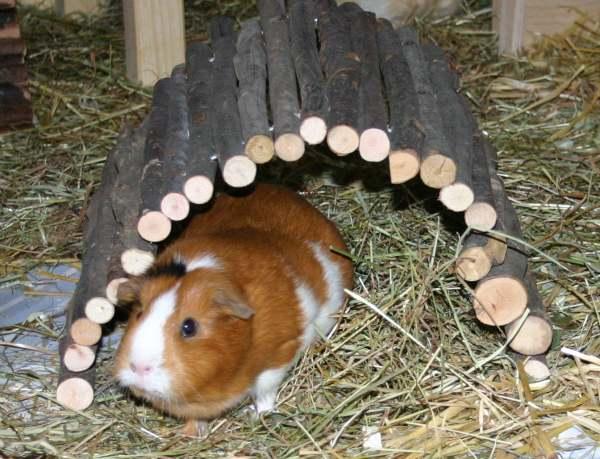 holzsteg zu rutschig kaninchen forum by sweetrabbits. Black Bedroom Furniture Sets. Home Design Ideas